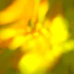 iOS Simulator Screen shot Jun 20, 2012 9.14.14 AM